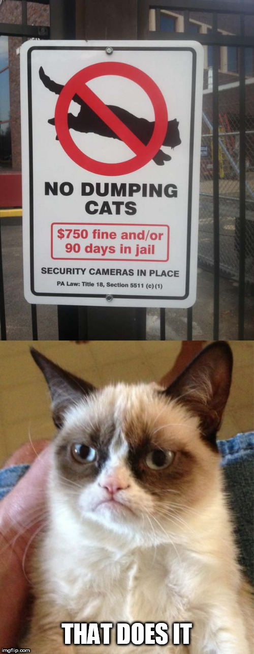 stupid sign week |  THAT DOES IT | image tagged in memes,grumpy cat,stupid signs week | made w/ Imgflip meme maker