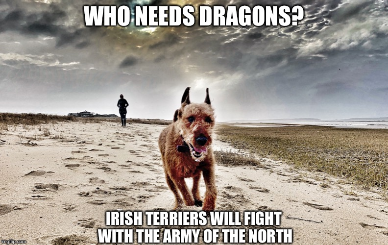 Fighting Irish, Game of Thrones |  WHO NEEDS DRAGONS? IRISH TERRIERS WILL FIGHT WITH THE ARMY OF THE NORTH | image tagged in irish terrier,game of thrones,got | made w/ Imgflip meme maker