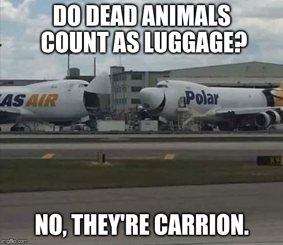 Laughing Planes | DO DEAD ANIMALS COUNT AS LUGGAGE? NO, THEY'RE CARRION. | image tagged in air,planes,laugning,cargo,luggage | made w/ Imgflip meme maker