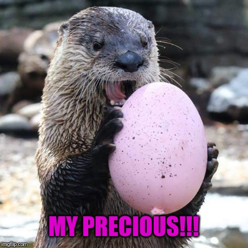 MY PRECIOUS!!! | image tagged in otter | made w/ Imgflip meme maker