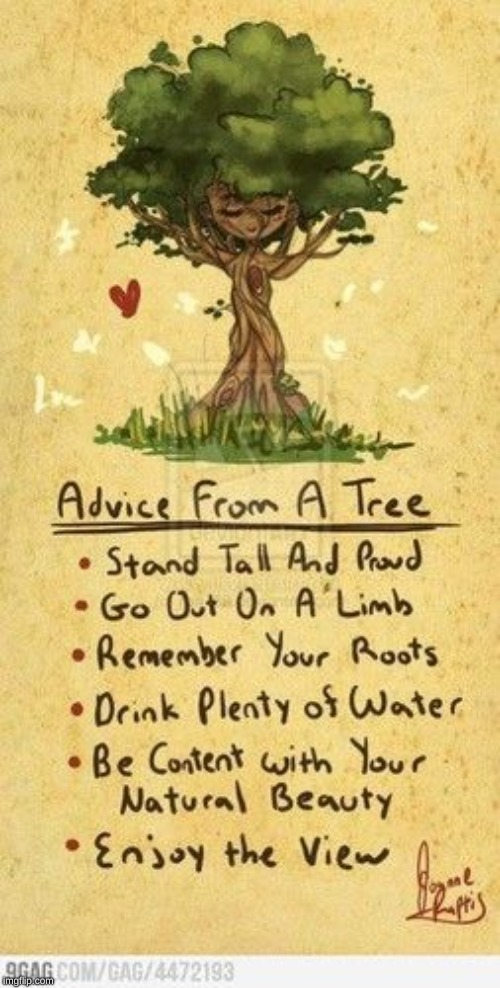Advice from a tree | image tagged in tree | made w/ Imgflip meme maker