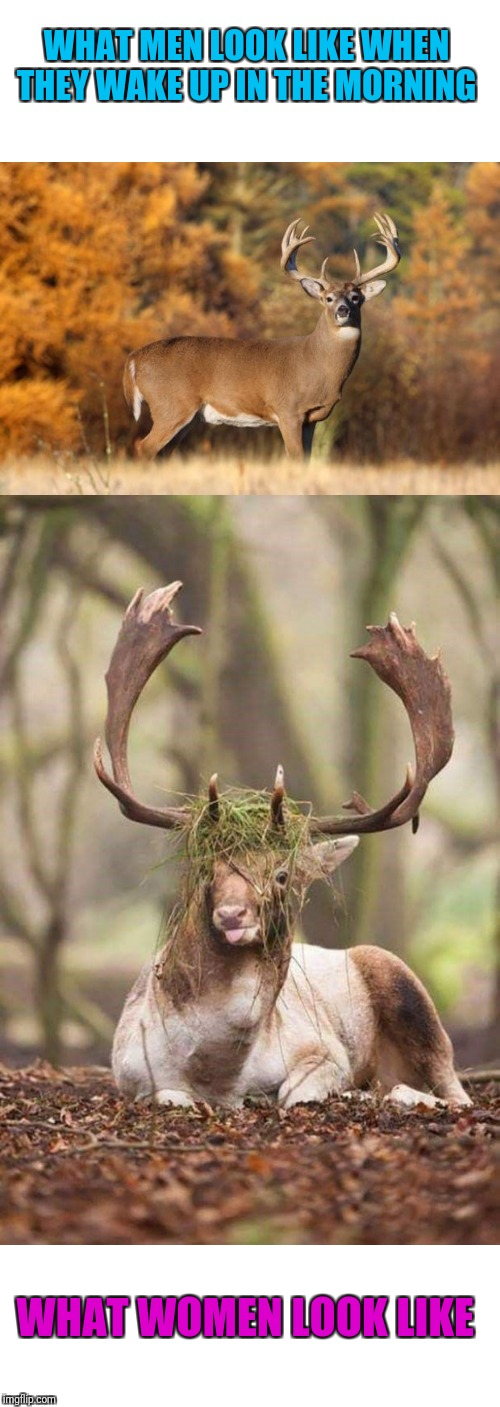 Or maybe it's just me ? | WHAT MEN LOOK LIKE WHEN THEY WAKE UP IN THE MORNING WHAT WOMEN LOOK LIKE | image tagged in whitetail deer,bed head,we don't do mornings | made w/ Imgflip meme maker