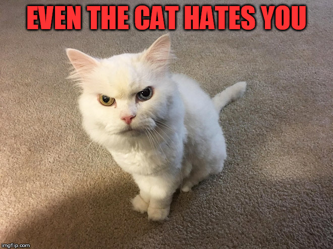 When having a bad day | EVEN THE CAT HATES YOU | image tagged in hate cat,evil cat,having a bad day | made w/ Imgflip meme maker
