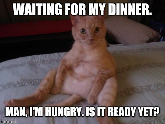Chester The Cat | WAITING FOR MY DINNER. MAN, I'M HUNGRY. IS IT READY YET? | image tagged in memes,chester the cat | made w/ Imgflip meme maker