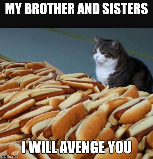 Cat hotdogs | MY BROTHER AND SISTERS I WILL AVENGE YOU | image tagged in cat hotdogs | made w/ Imgflip meme maker