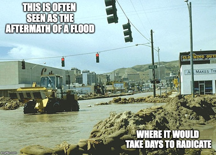 Aftermath of a Flood | THIS IS OFTEN SEEN AS THE AFTERMATH OF A FLOOD WHERE IT WOULD TAKE DAYS TO RADICATE | image tagged in flood,aftermath,memes | made w/ Imgflip meme maker
