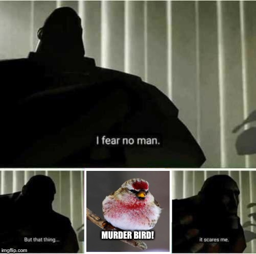 FEAR THE MURDER BIRD! | MURDER BIRD! | image tagged in i fear no man,murder bird | made w/ Imgflip meme maker