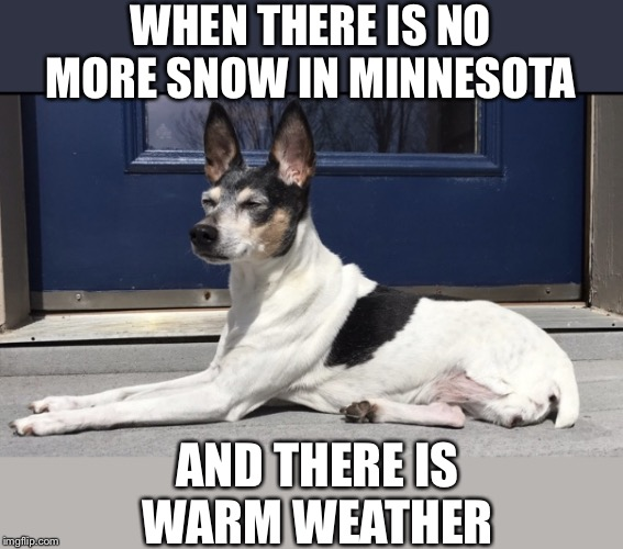 ☀️ That Minnesota sun ☀️ | WHEN THERE IS NO MORE SNOW IN MINNESOTA AND THERE IS WARM WEATHER | image tagged in dogs,minnesota,summer | made w/ Imgflip meme maker