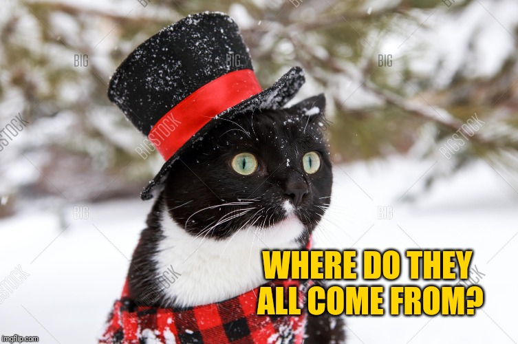 Top hat cat snow | WHERE DO THEY ALL COME FROM? | image tagged in top hat cat snow | made w/ Imgflip meme maker