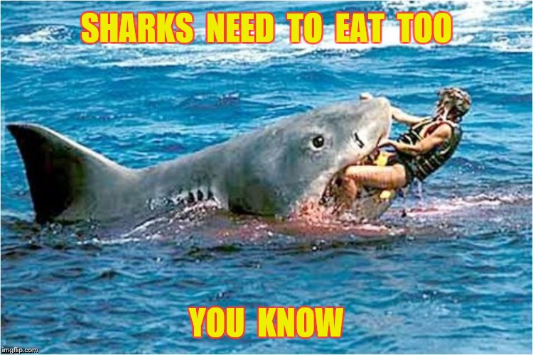 SHARKS  NEED  TO  EAT  TOO YOU  KNOW | made w/ Imgflip meme maker