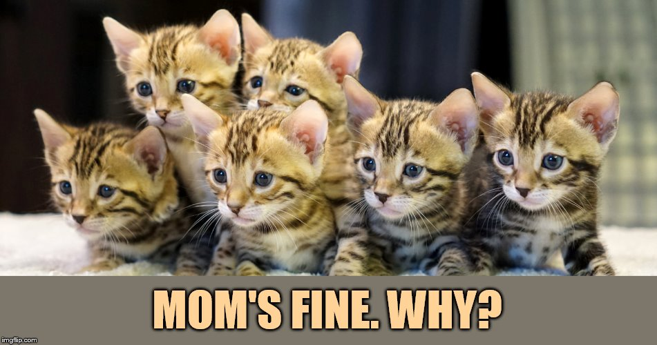 MOM'S FINE. WHY? | made w/ Imgflip meme maker