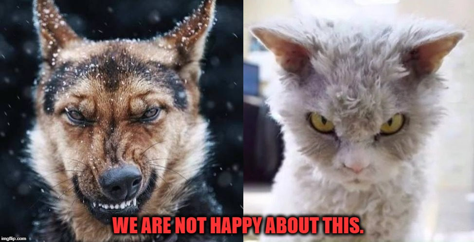 United in Dissent | WE ARE NOT HAPPY ABOUT THIS. | image tagged in dogs,cats,angry,angry cat,angry dog | made w/ Imgflip meme maker