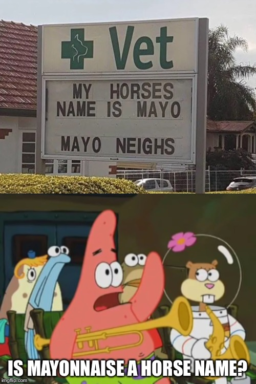 Is mayonnaise a horse? | IS MAYONNAISE A HORSE NAME? | image tagged in is mayonnaise an instrument,memes,patrick | made w/ Imgflip meme maker