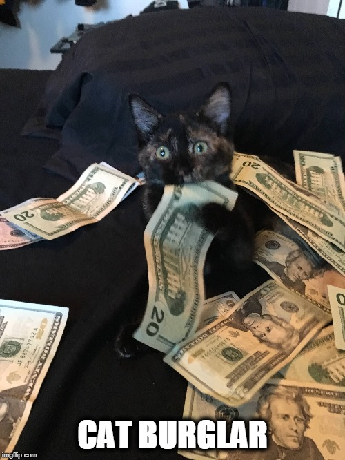 You'll Be Lucky To Make Purr-ole | CAT BURGLAR | image tagged in cat,burglar,steal,money,parole | made w/ Imgflip meme maker