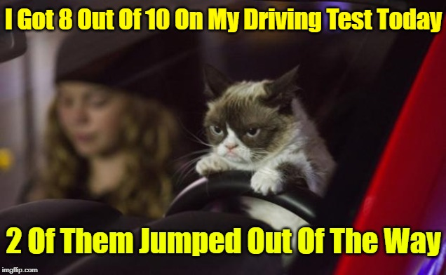I'll Get 10 Out Of 10 Tomorrow! | I Got 8 Out Of 10 On My Driving Test Today 2 Of Them Jumped Out Of The Way | image tagged in grumpy cat driving,memes,socrates,grumpy cat,bad drivers,driving | made w/ Imgflip meme maker