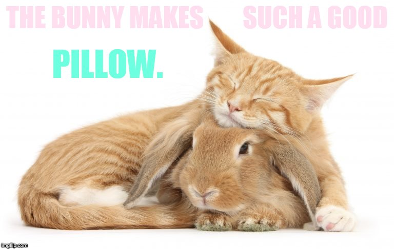 THE BUNNY MAKES        SUCH A GOOD PILLOW. | made w/ Imgflip meme maker