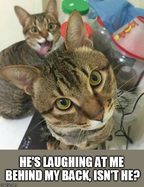 HE'S LAUGHING AT ME BEHIND MY BACK, ISN'T HE? | made w/ Imgflip meme maker
