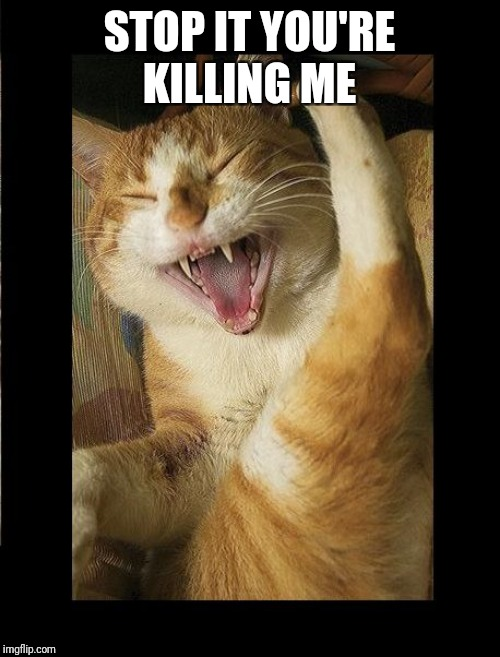 Laughing Cat | STOP IT YOU'RE KILLING ME | image tagged in laughing cat | made w/ Imgflip meme maker