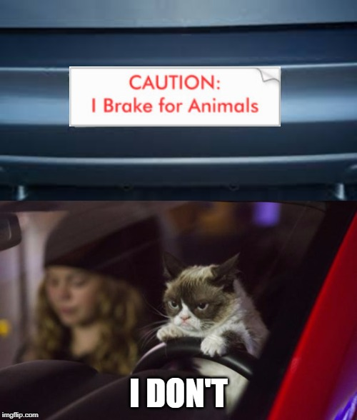Beep! Beep! Get out of the way! ≧◠‿◠≦ | I DON'T | image tagged in memes,grumpy cat,grumpy cat driving,car,bumper sticker,stupid signs | made w/ Imgflip meme maker