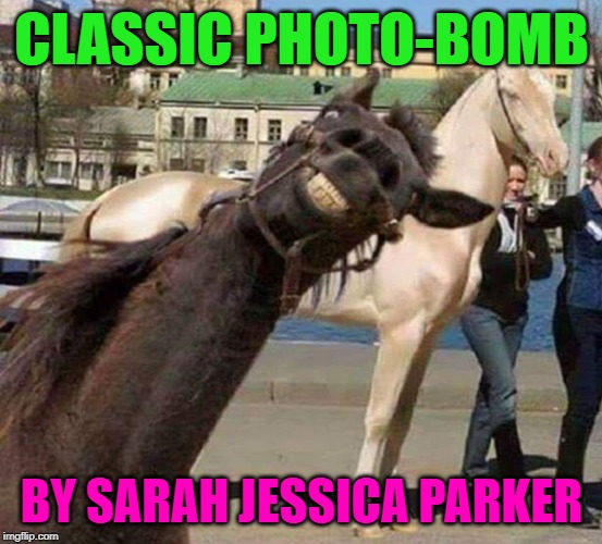 She's so funny... | CLASSIC PHOTO-BOMB BY SARAH JESSICA PARKER | image tagged in funny,funny memes,celebrities,animals,memes | made w/ Imgflip meme maker