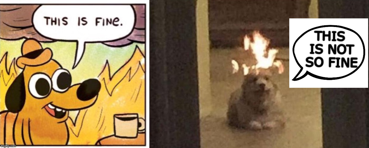 Good (hot) doggie! | THIS IS NOT SO FINE | image tagged in this is fine dog,dogs,memes,funny | made w/ Imgflip meme maker