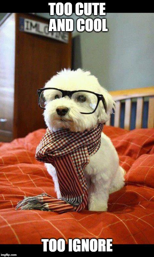 Intelligent Dog Meme | TOO CUTE AND COOL TOO IGNORE | image tagged in memes,intelligent dog | made w/ Imgflip meme maker