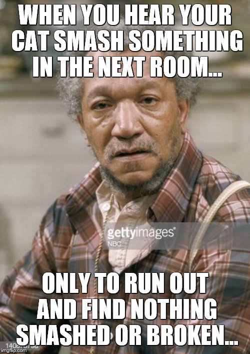 WHEN YOU HEAR YOUR CAT SMASH SOMETHING IN THE NEXT ROOM... ONLY TO RUN OUT AND FIND NOTHING SMASHED OR BROKEN... | image tagged in funny cat,cats,fred sanford | made w/ Imgflip meme maker