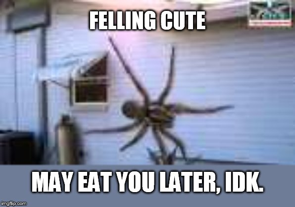 get the raid | FELLING CUTE MAY EAT YOU LATER, IDK. | image tagged in giant spider | made w/ Imgflip meme maker