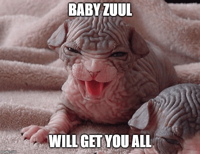 Baby Zuul | BABY ZUUL WILL GET YOU ALL | image tagged in ghostbusters,kitten | made w/ Imgflip meme maker