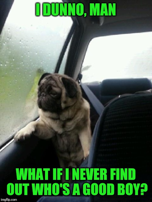 Introspective Pug | I DUNNO, MAN WHAT IF I NEVER FIND OUT WHO'S A GOOD BOY? | image tagged in introspective pug | made w/ Imgflip meme maker