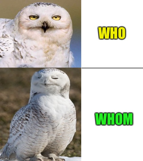 Now that's a classy owl - Inspired by the Tuxedo Winnie the Pooh meme template. | WHO WHOM | image tagged in meme,templates,inspiration,tuxedo winnie the pooh,owls,stay classy | made w/ Imgflip meme maker
