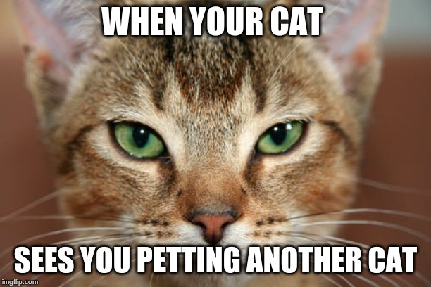 Angry Citty | WHEN YOUR CAT SEES YOU PETTING ANOTHER CAT | image tagged in cats,funny cats | made w/ Imgflip meme maker