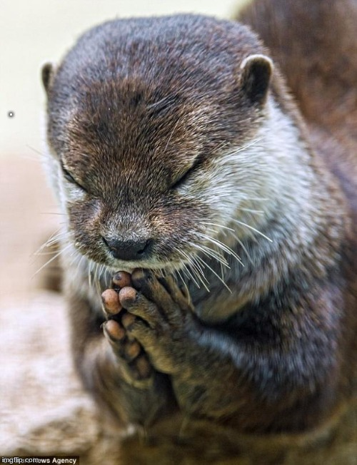 Thank you Lord Otter | . | image tagged in thank you lord otter | made w/ Imgflip meme maker