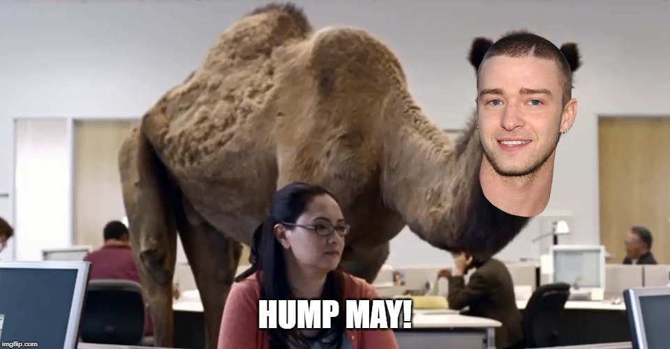 Hump May! | HUMP MAY! | image tagged in geico,camel,hump day camel,justin timberlake,it's gonna be may | made w/ Imgflip meme maker