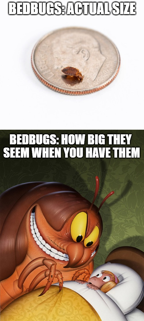 Bedbug Nightmare | BEDBUGS: ACTUAL SIZE BEDBUGS: HOW BIG THEY SEEM WHEN YOU HAVE THEM | image tagged in bedbug nightmare,big ass bedbug,bedbugs,nightmare,actual size,comparison | made w/ Imgflip meme maker