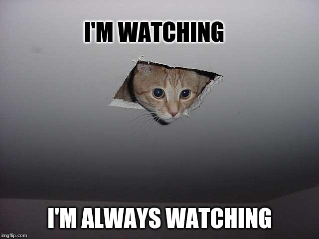 I'M WATCHING I'M ALWAYS WATCHING | image tagged in cat meme | made w/ Imgflip meme maker