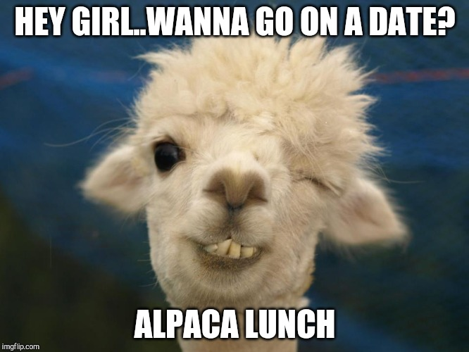 Alpaca | HEY GIRL..WANNA GO ON A DATE? ALPACA LUNCH | image tagged in alpaca,puns,animal,lunch,hey girl,funny | made w/ Imgflip meme maker