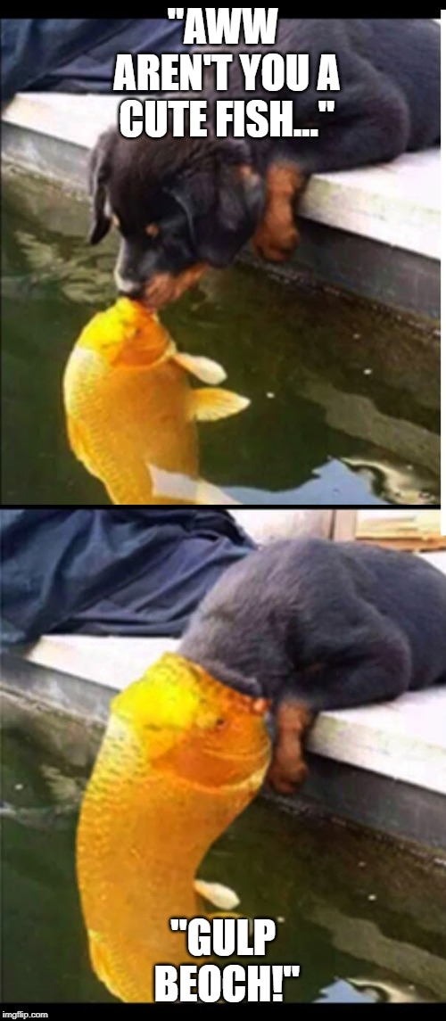 "The Snack that Swallows Back! | ""AWW AREN'T YOU A CUTE FISH..."" ""GULP BEOCH!"" 
