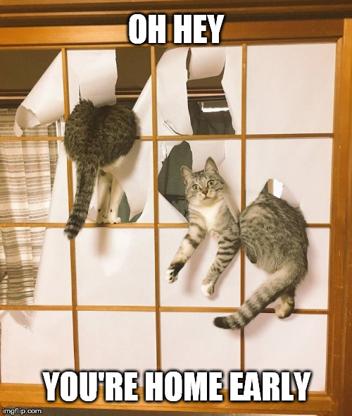 Uhhh... I can explain | OH HEY YOU'RE HOME EARLY | image tagged in cats,you're,home,early,ooops,busted | made w/ Imgflip meme maker