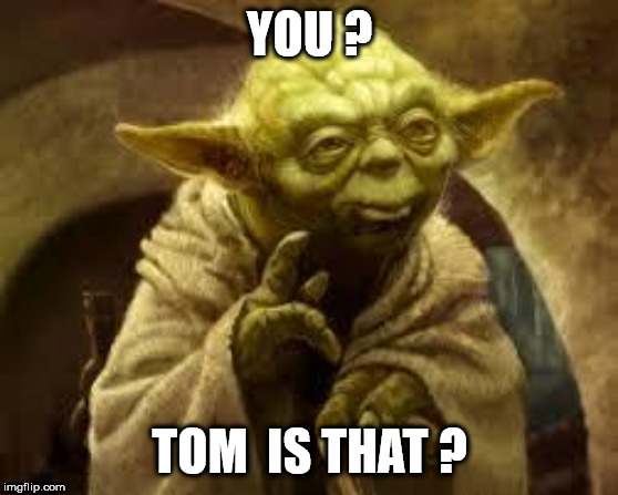 yoda | YOU ? TOM  IS THAT ? | image tagged in yoda | made w/ Imgflip meme maker