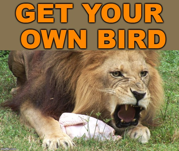 Back off | GET YOUR OWN BIRD | image tagged in lion eating turkey | made w/ Imgflip meme maker