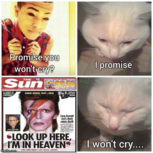 Still hurts | image tagged in david bowie,cancer,cat,crying cat,david,bowie | made w/ Imgflip meme maker