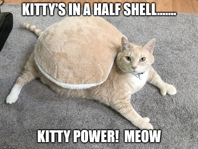 ninja turtle kitty | KITTY'S IN A HALF SHELL....... KITTY POWER!  MEOW | image tagged in cats,fat cat,funny cat memes,cat memes,pets,funny memes | made w/ Imgflip meme maker