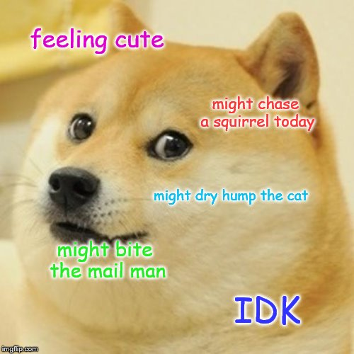 Doge |  feeling cute; might chase a squirrel today; might dry hump the cat; might bite the mail man; IDK | image tagged in memes,doge | made w/ Imgflip meme maker