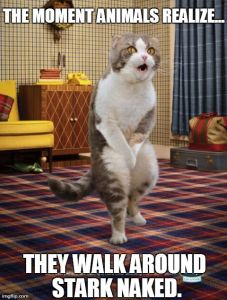 THE MOMENT ANIMALS REALIZE... THEY WALK AROUND STARK NAKED. | image tagged in memes,gotta go cat | made w/ Imgflip meme maker