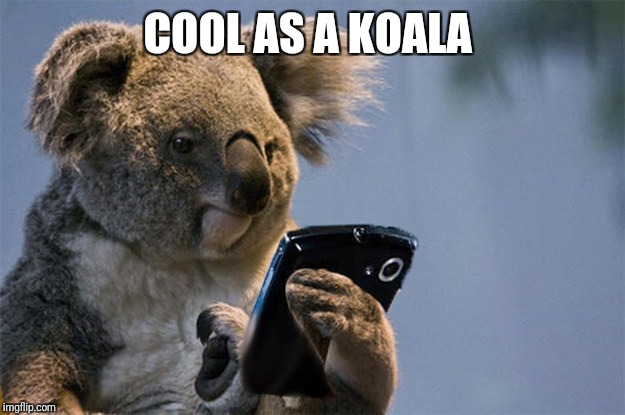 Smartphone koala | COOL AS A KOALA | image tagged in smartphone koala | made w/ Imgflip meme maker