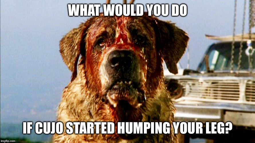 WHAT WOULD YOU DO IF CUJO STARTED HUMPING YOUR LEG? | image tagged in dogs,stephen king,horror,funny | made w/ Imgflip meme maker