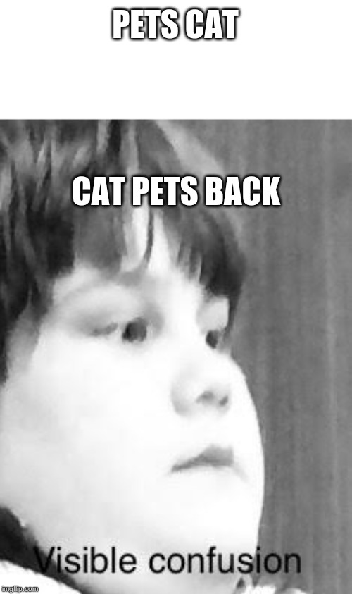visible confusion | PETS CAT CAT PETS BACK | image tagged in visible confusion | made w/ Imgflip meme maker