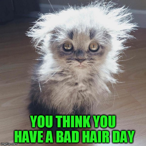 Yeah, I need to get my hair done | YOU THINK YOU HAVE A BAD HAIR DAY | image tagged in hair,funny | made w/ Imgflip meme maker