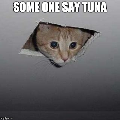 Ceiling Cat |  SOME ONE SAY TUNA | image tagged in memes,ceiling cat | made w/ Imgflip meme maker